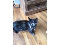 Kitten female