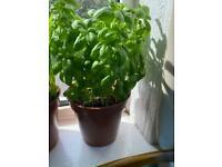 DIY seedlings and seeds, house plants