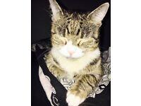 Lovely cat needs new home