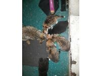 6 cute kittens for sale
