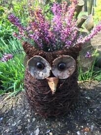 Fun owl planter planted with Erica. Beautiful