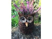 Fun owl planter planted with Erica. Beautiful