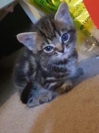 Kittens £40 each