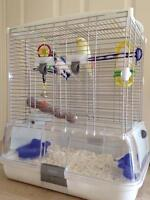 Birds for Sale - 2 beautiful budgies with cage and toys