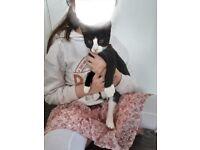 Kitten urgently needs a home