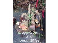 Yew tree for woodturning, carving, craft ect.