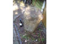 Holly tree trunk!