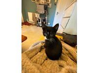Kitten needing a new home. Female