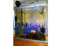 fish tank 130liters , aquarium with accesories and fish