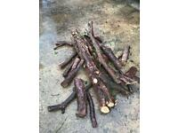 Pile of yew logs of varying sizing wood turning job lot