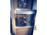 As New 60L Fish Tank, Fish and Ornaments