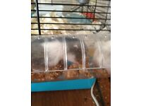 Baby hamsters for sale £5
