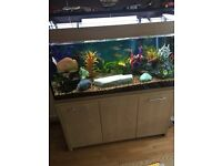 Aqua 1 fish tank is in great working order all fish with tank and pumps