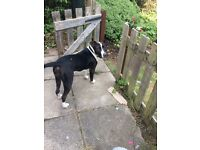 7 month old mixed breed female dog. Fully vaccinated wormed and flea Also microchipped