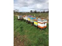 5 frame nuc of bees