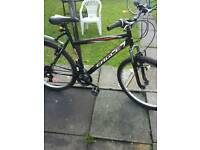British eagle bike adult