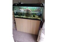 3 female musk turtles, tank and accessories. Stand/ cabinet available