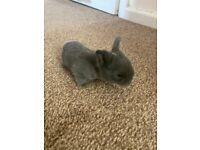 Grey baby bunnies