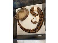 Multi pies ball pythons and snake rack