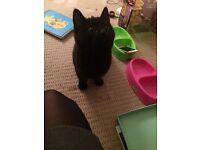 Kitten to nice home ASAP