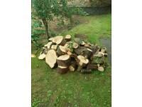 Fire wood freshly cut logs