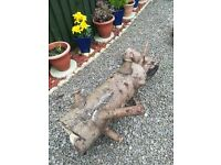 FREE LARGE TREE STUMPS FOR COLLECTION IDEAL FOR LOG FIRES OR WOOD BURNERS