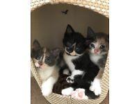 5 lovely Kittens. Ready now x