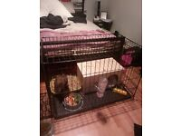 Rabbit cage and toys