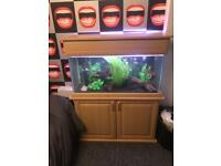 3ft fish tank and external filter