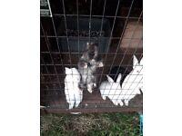 Baby rabbits LOOK