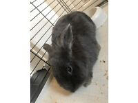 2x male bunnies 8 month old