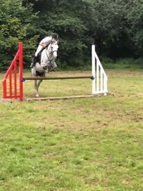 13.3hh jumping pony grey mare