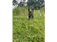 FK9 dog walking and training services