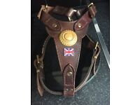 Dogs leather harness