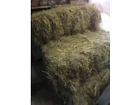 5 small bales of hay