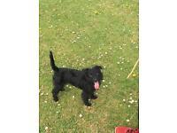 Dog walking, pet sitting or visits