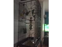 Large cage with stand and x2 baby budgies.