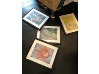 4 x pictures prints of flowers