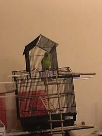 Bird cage Parrot