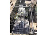 Medium sized pond pump, filter ,water feature attachment ,everything for pond setup