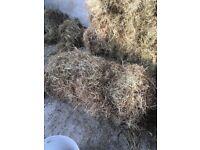 5+ year old hay bales