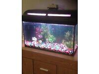 Tropical fish tank full set up + fish