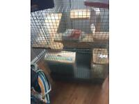 Degu cage food sawdust and sand bath