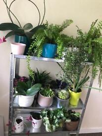 Indoor and out door plants