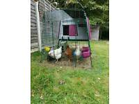 Omlet chicken coop with chickens and all assesories