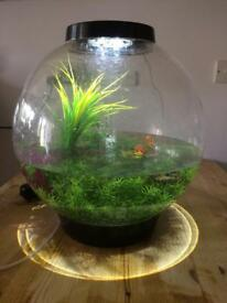 Biorb 30L fish tank and plants