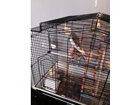 I have 2 birds for sale sorry now gon