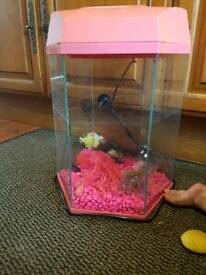 Pink fish tank with lights ornaments and stones