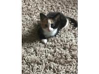 kitten vaccinated