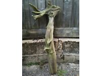 """Natural sculpted driftwood """"In The Eye Of Beholder by Wolf"""